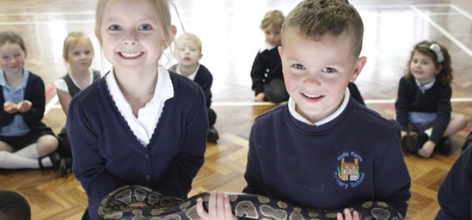 Photos of the Animal Man visit to Early Years