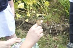 Bells Farm butterflies released