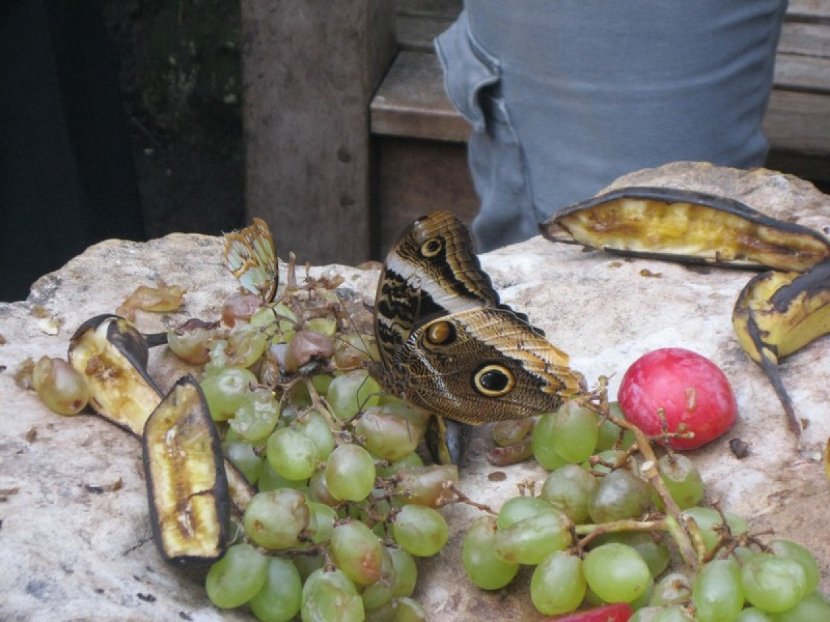 Year 1 trip to Butterfly Farm