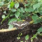 Year 1 Butterfly Farm trip