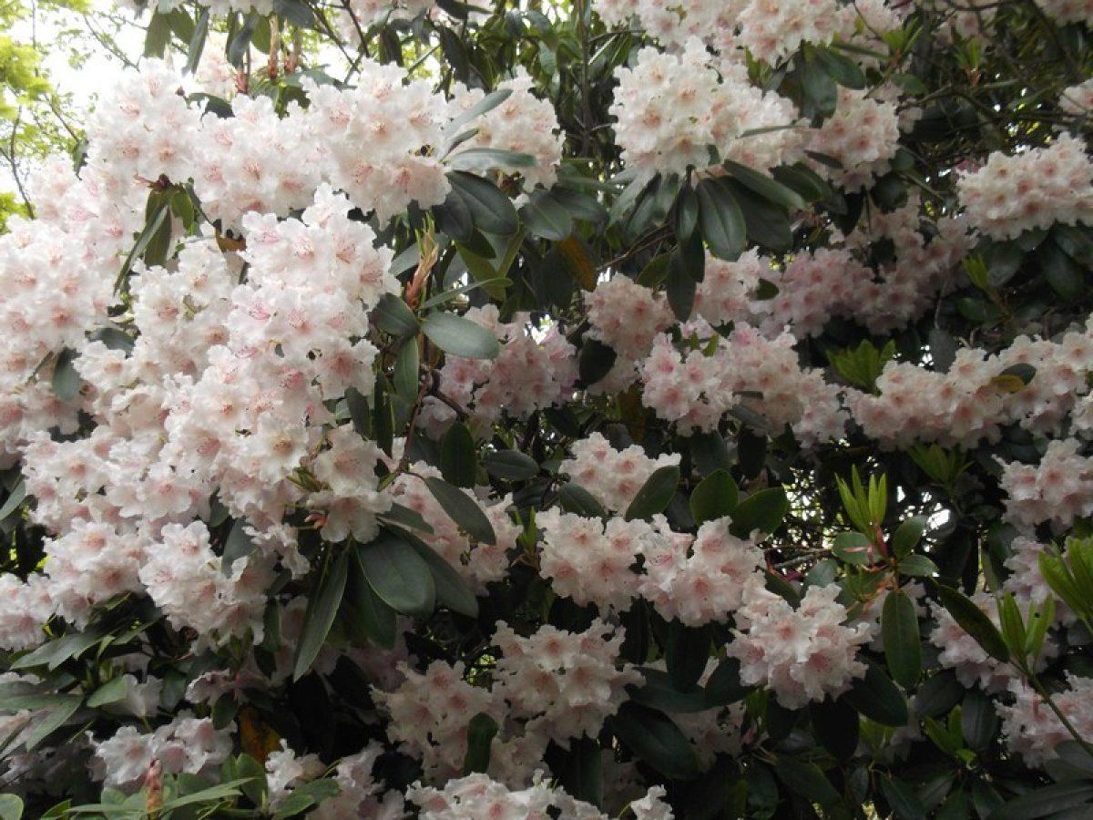 Year 3 Botanical Gardens