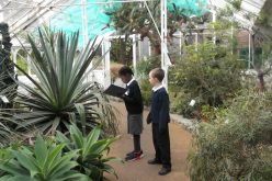 Photos of Year 3's Botanical Gardens trip