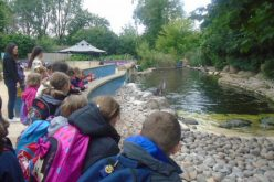 Photos of Year 2's Twycross Zoo trip