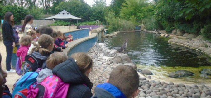 Photos of Year 2's Twycross Zoo trip